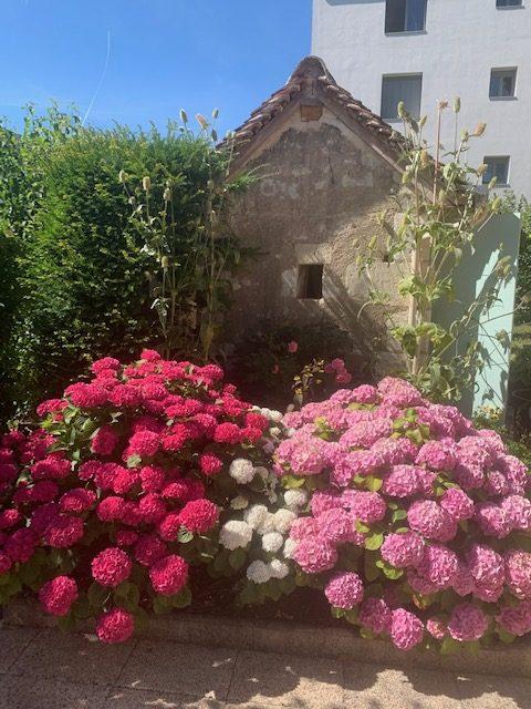 2) Le magnifique jardin fleuri